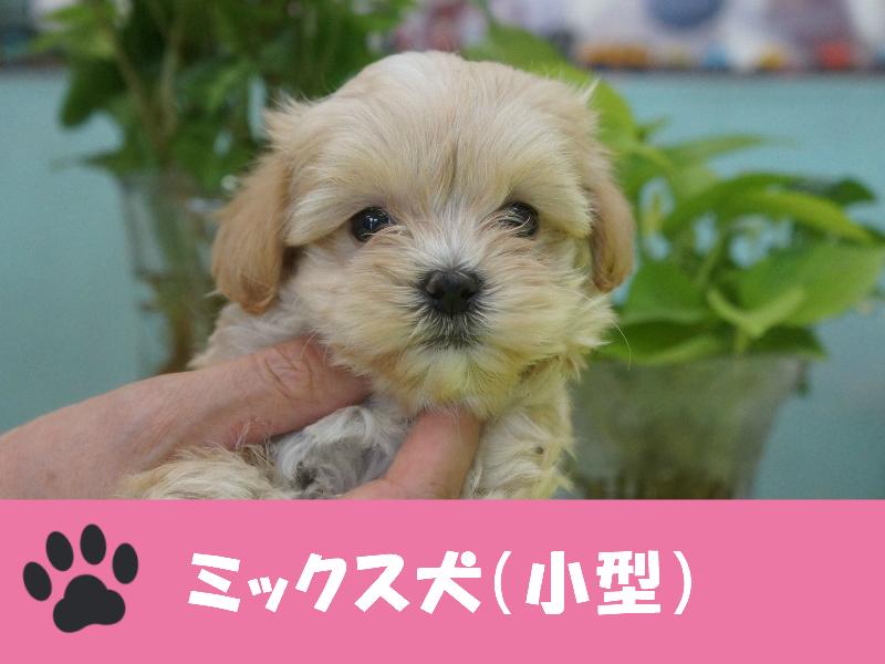 ミックス犬(小型)